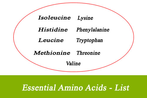 List of Essential Amino Acids
